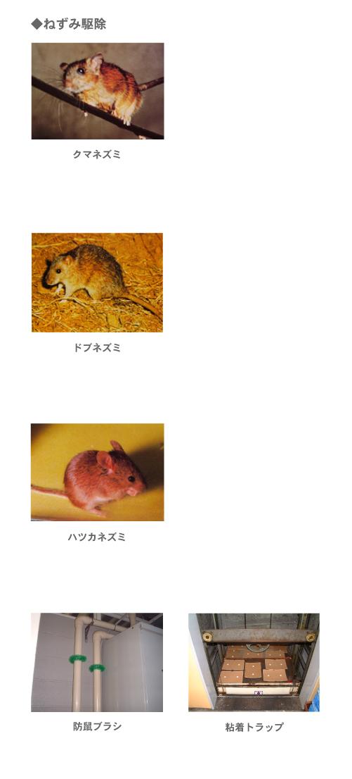 【シロアリ・その他害虫】ネズミ駆除