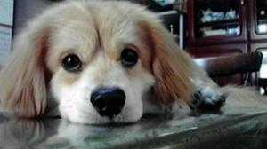 ブログ写真.JPGのサムネール画像のサムネール画像のサムネール画像