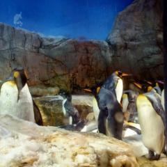 010ペンギン.jpg